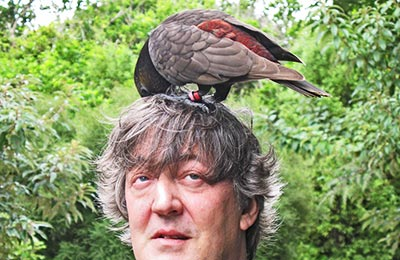 Stephen Fry: A comedy Attenborough?